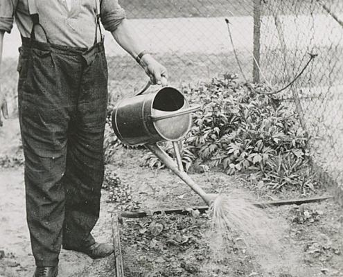 Walter Biesler begießt die ersten Bohnen