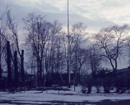 Winter, Baumfällaktion auf dem Gelände
